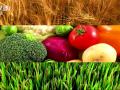 鲁西集团央视化肥产品广告 (0播放)